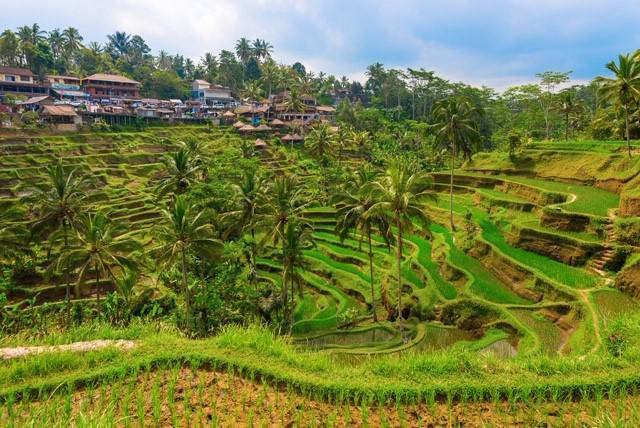 画像: インドネシア世界遺産ライステラス(イメージ)