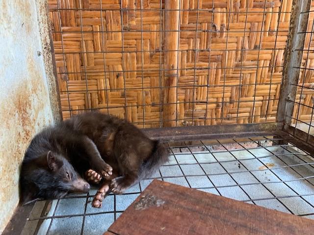 画像: 寝ているジャコウネコ/弊社スタッフ撮影