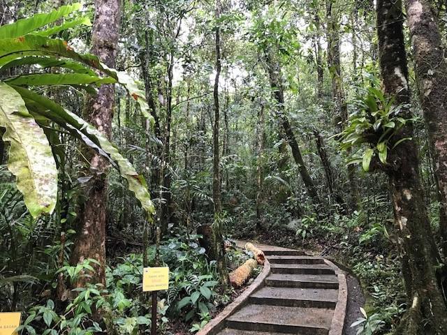 画像: キナバル自然公園/弊社スタッフ撮影