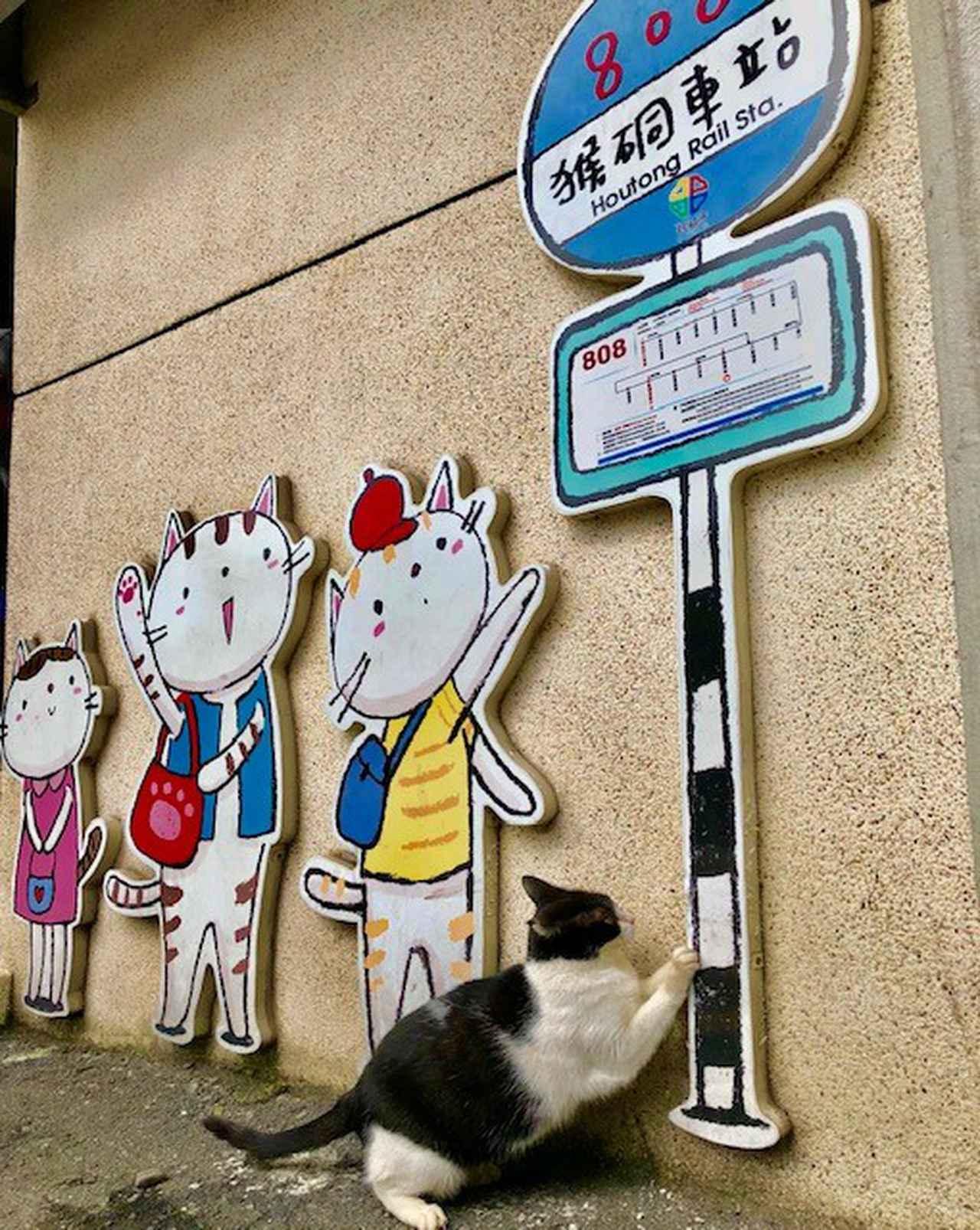 画像2: 猫村/水野撮影