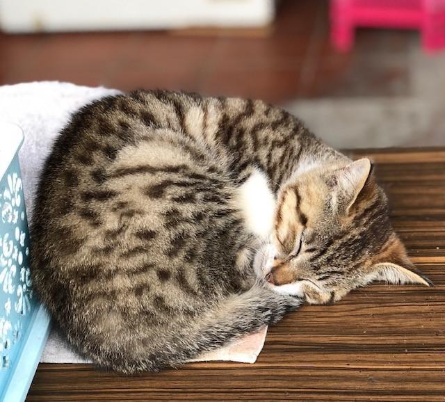 画像: 猫村の猫/水野撮影