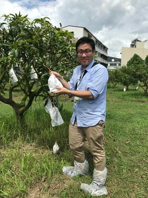 画像: マンゴー狩りをしている台湾担当/弊社スタッフ撮影(2018年7月)