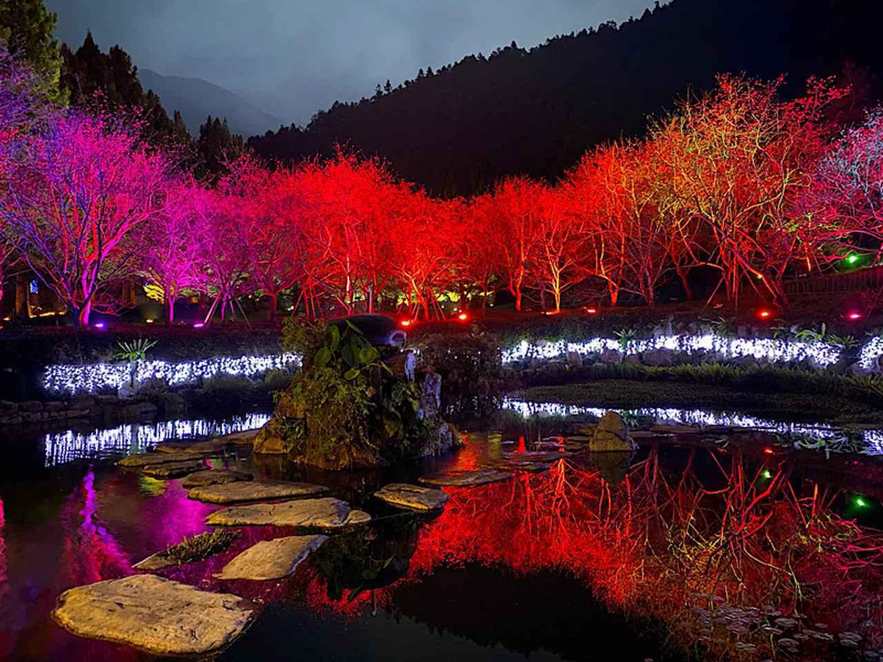 画像: 中腹にある桜花湖とライトアップ/弊社スタッフ撮影(2020年2月10日)