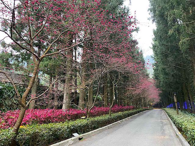 画像: 桜並木/弊社スタッフ撮影(2020年2月10日)