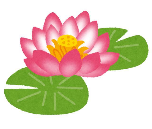 画像3: 花カレンダー2021 <1月1回目> 『紅い睡蓮ータイの花風景』 【好奇心で旅する海外】<花咲くワールド>