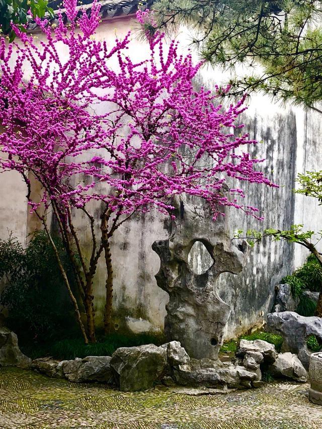 画像3: 世界遺産・蘇州の留園(3月撮影 イメージ)