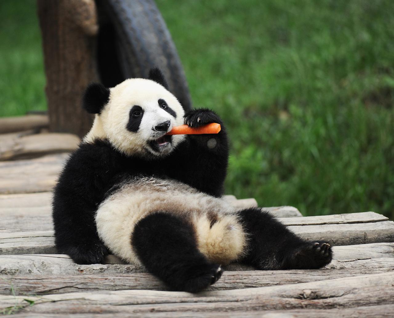 画像: ほら、尻尾が白でしょ! (中国国家観光局大阪提供 イメージ)
