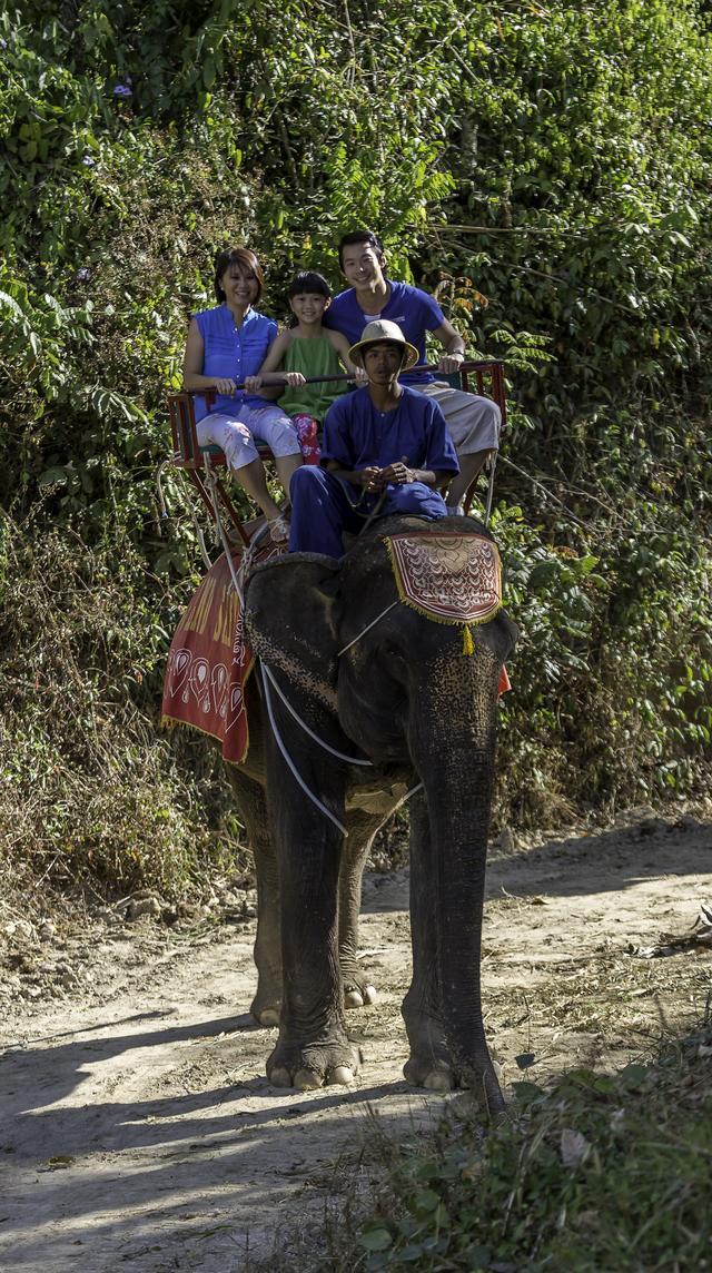画像: 象乗り体験