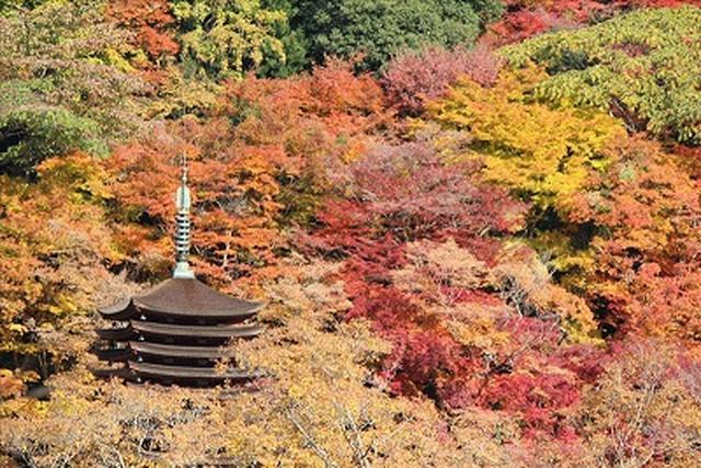 画像: 談山神社(お客様写真/矢野一馬様:神奈川県在住)