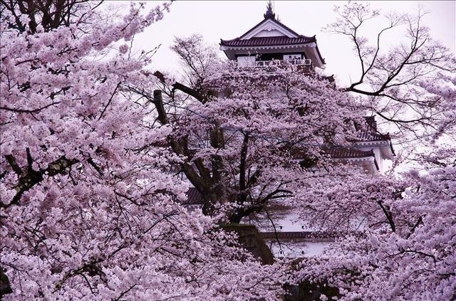 画像: 鶴ヶ城公園(お客様写真:品川+正和様:東京都在住)