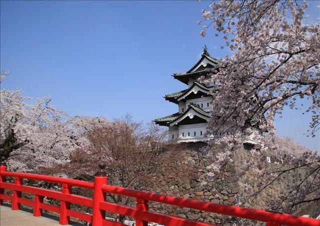 画像: 桜満開の弘前城(弘前市/弘前城公園・4月) 兵庫県在住:今田 裕様