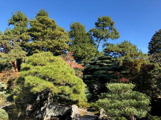 画像: 京都御所内の木々の色づき(大脇撮影)