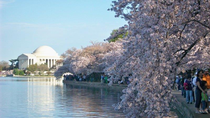 画像: ポトマック川&タイダル池の桜並木(イメージ)