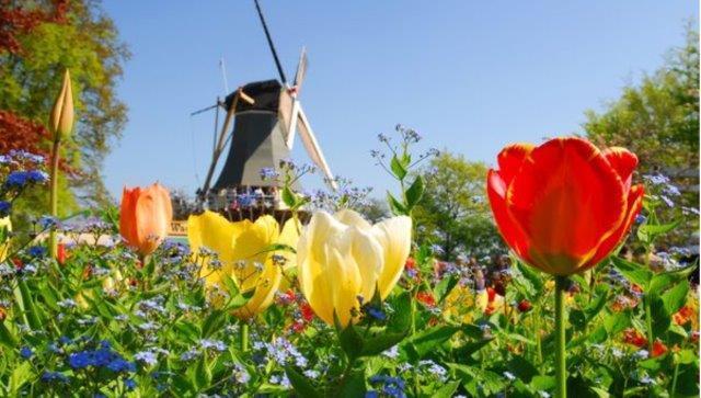 画像: K5510-2【クイーン・ヴィクトリア】 羽田発着 春の訪れを告げる 花のヨーロッパ周遊クルーズ 9日間<ゆったり旅>/2020年3月29日出発・催行決定 |クラブツーリズム