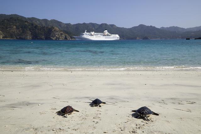 画像: 砂浜とぱしふぃっく びいなす/日本クルーズ客船提供 ※ウミガメは自然現象のためご覧いただけない場合があります