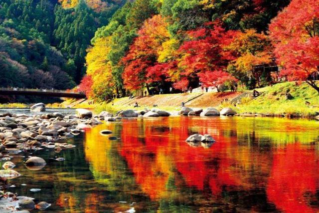 画像: 『【にっぽん丸】 横浜発着 秋の絶景クルーズ~香嵐渓~ 3日間』2020年11月24日(火)出発<GoToトラベル事業支援対象>|クラブツーリズム