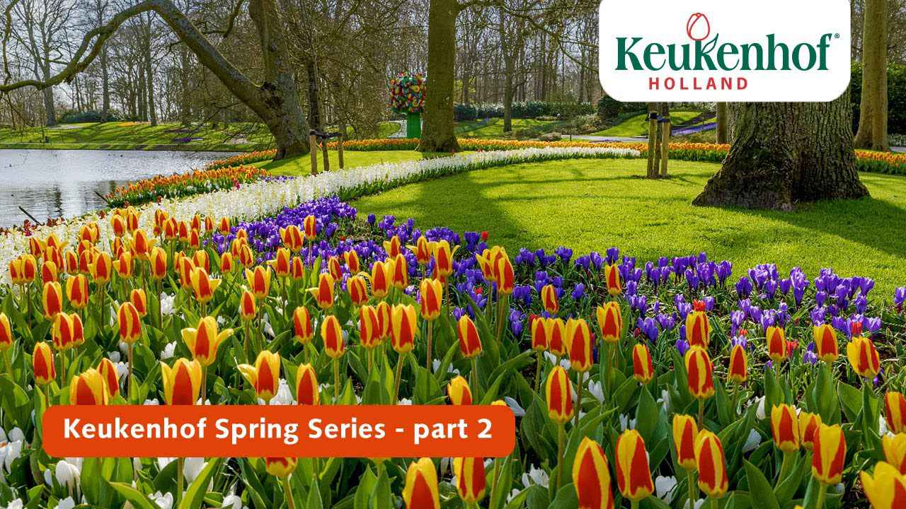 画像: Keukenhof Spring Series part 2 | Keukenhof 2021 youtu.be