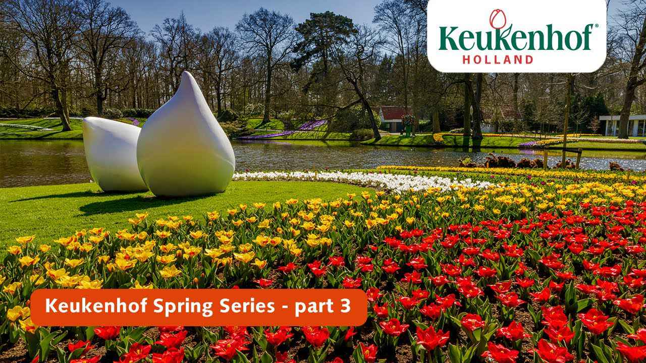 画像: Keukenhof Spring Series part 3 | Keukenhof 2021 youtu.be