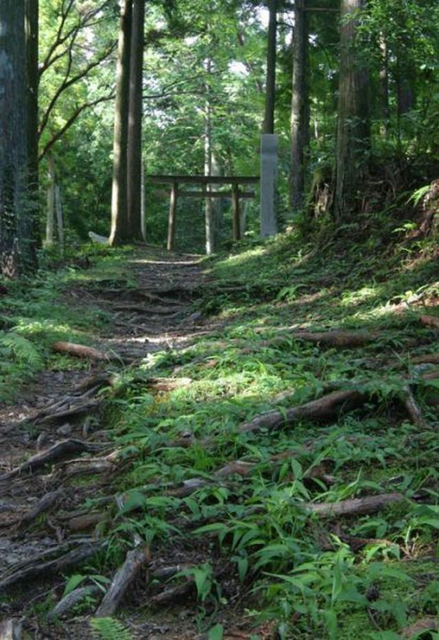 画像: 苔むす熊野古道