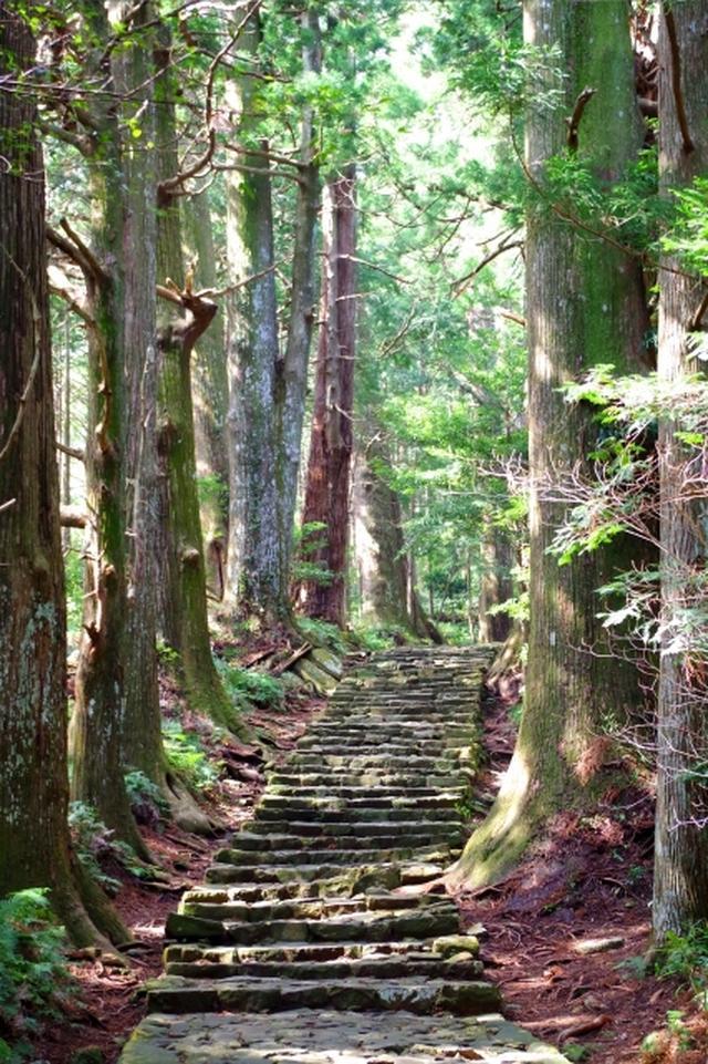 画像: 世界遺産 熊野古 大門坂