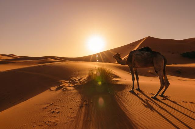 画像: サハラ砂漠(イメージ)