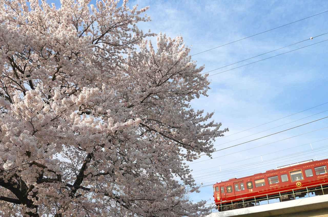 画像: 桜とろくもん