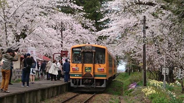 画像: 桜に彩られた「芦野公園駅」に停車する列車 (イメージ)