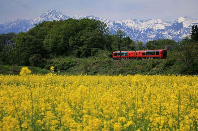 画像: 妙高山を背に菜の花畑を望む春の雪月花