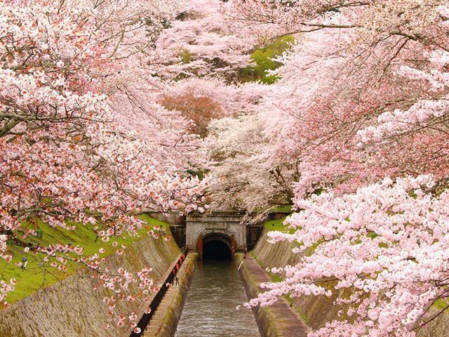 画像: クラブツーリズムの最上級国内の旅 四季の華 桜ツアー・旅行2021【関東発】│クラブツーリズム