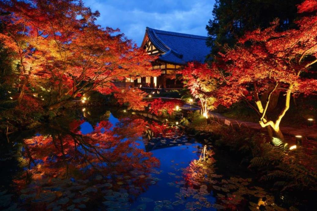 画像: 『錦織りなす古都の旅情 紅色に染まる京都の名刹を訪ねて3日間』<四季の華/19名様以下/バス1人2席利用> クラブツーリズム
