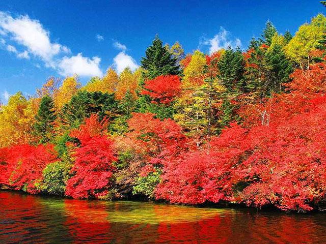 画像: 四季の華 秋の紅葉ツアー・旅行【関東発】│クラブツーリズム