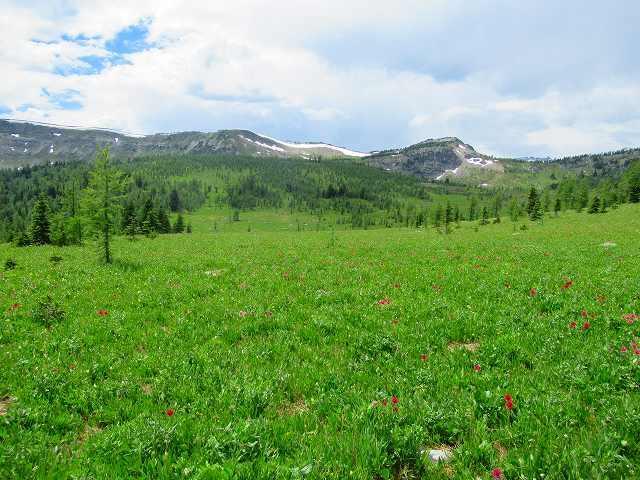 画像3: カナダのフラワーハイキング
