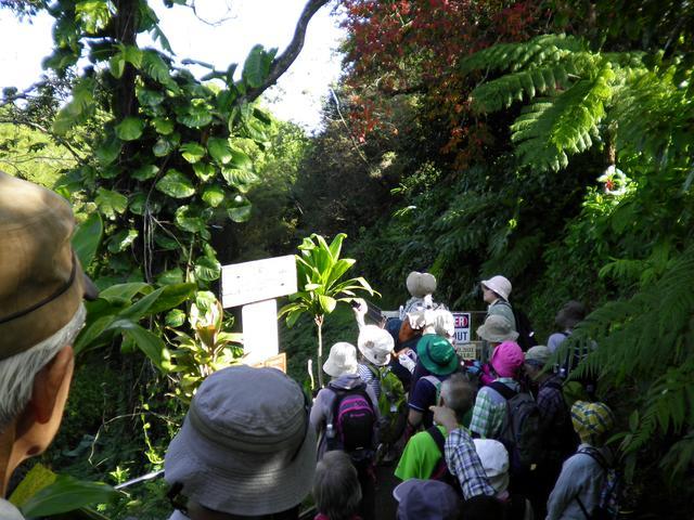 画像: うっそうと生い茂る植物の中を歩きます。この先を抜けると滝をご覧いただけます!