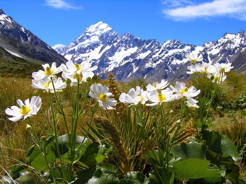 画像: 【26721】<ハイク初級>『ニュージーランド南島 花のハイキング 9日間』 南島の魅力をじっくり体感 好評のため1/22出発追加設定|クラブツーリズム