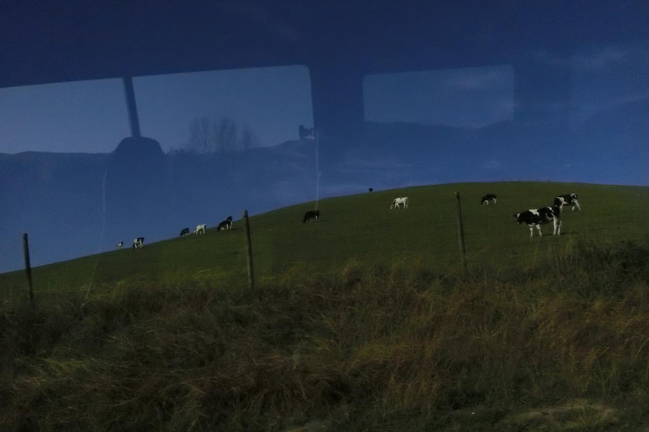 画像3: 【地球を走ろう】温泉とマオリの街 ニュージーランド ロトルアマラソンツアーレポート