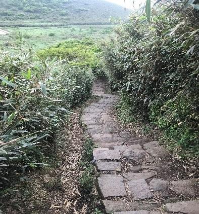 画像: ハイキング途中の道