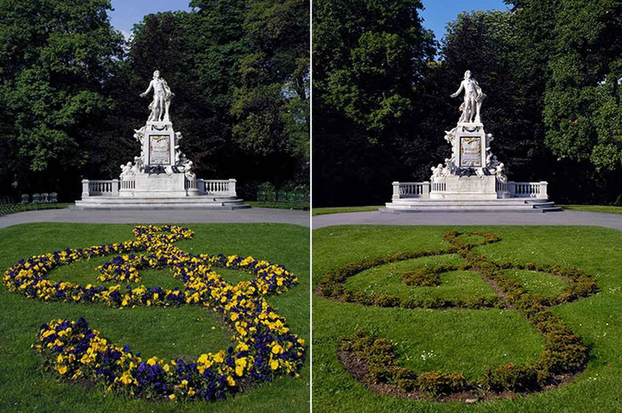 画像: 訪れる時期によって違うト音記号の花