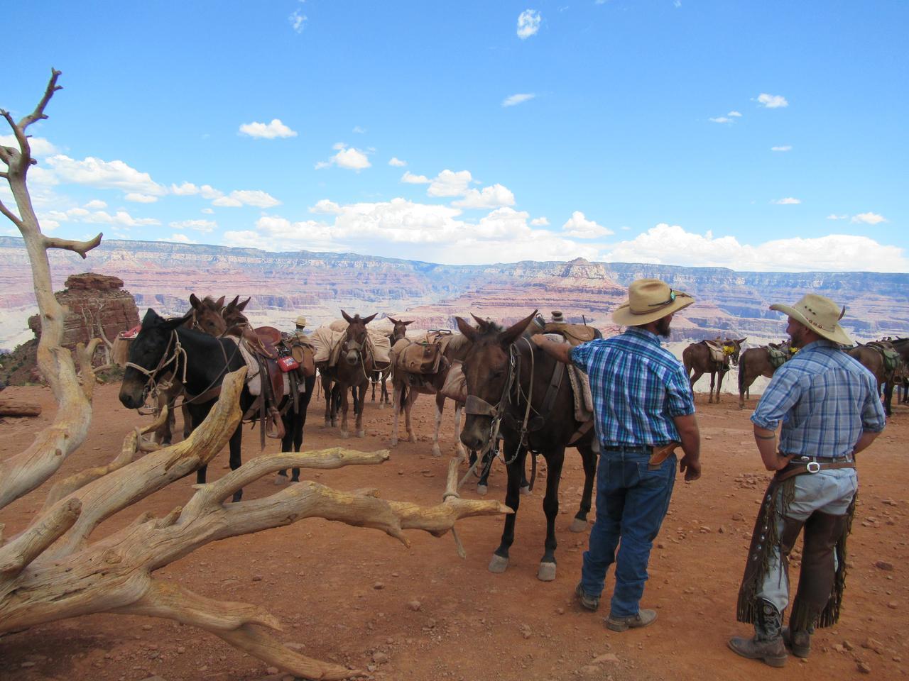 画像: ハイキング中の風景―ミュール(馬とロバのハーフの動物)が荷物を運んでました