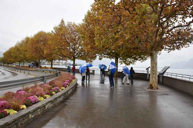 画像1: 【地球を走ろう!】黄葉美しい秋のレマン湖  スイス・ローザンヌマラソンツアー 大会レポート