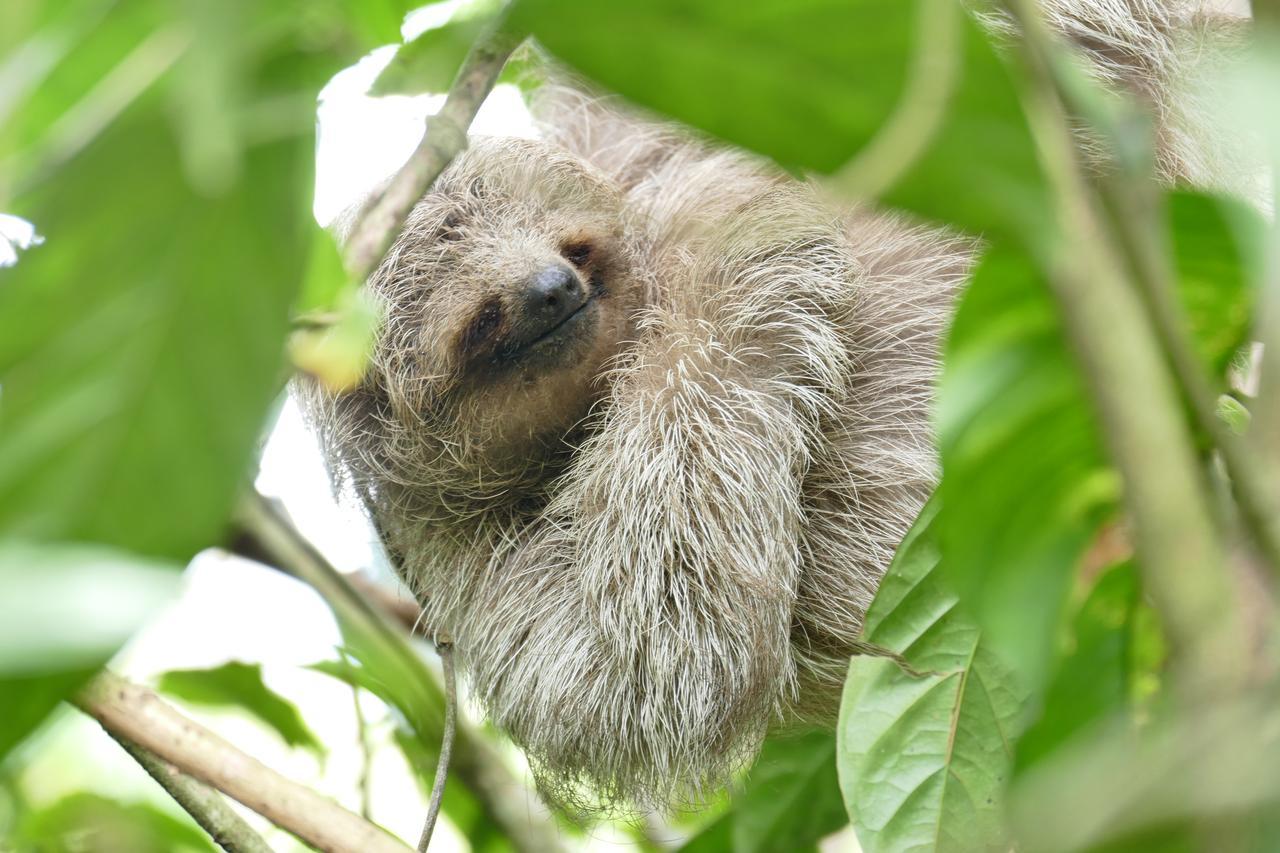 画像: まるで微笑んでいるようなナマケモノ サラピキ近郊やグアピアスなどコスタリカの様々なところで出会えます。