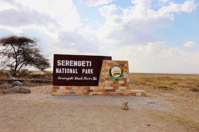 画像: セレンゲティ国立公園(イメージ/スタッフ撮影)