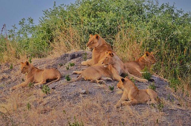 画像: チョベ公園のライオン(イメージ)