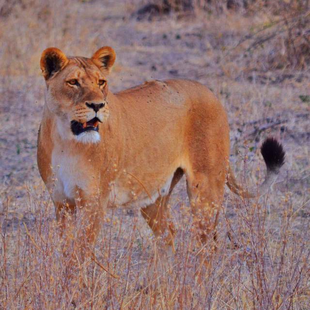 画像4: 【南アフリカ】大自然を満喫!南アフリカ旅行の基本情報