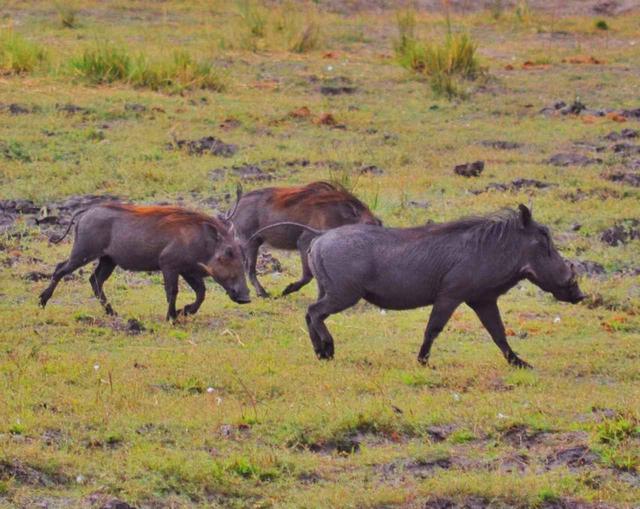 画像7: 【南アフリカ】大自然を満喫!南アフリカ旅行の基本情報