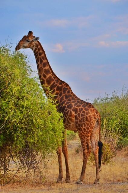 画像6: 【南アフリカ】大自然を満喫!南アフリカ旅行の基本情報