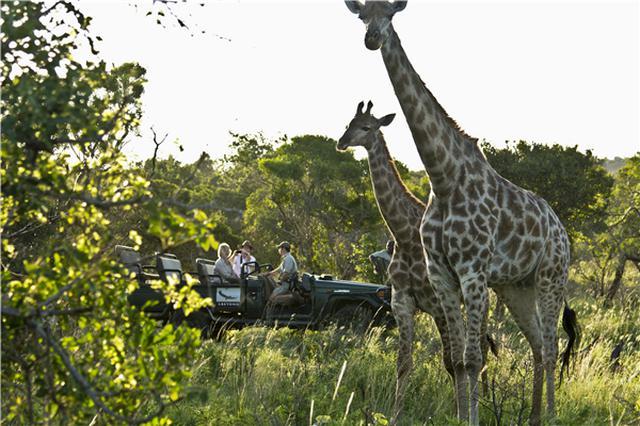画像: アフリカといえば動物サファリ(C)南アフリカ観光局