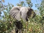 画像10: 【南アフリカ】大自然を満喫!南アフリカ旅行の基本情報