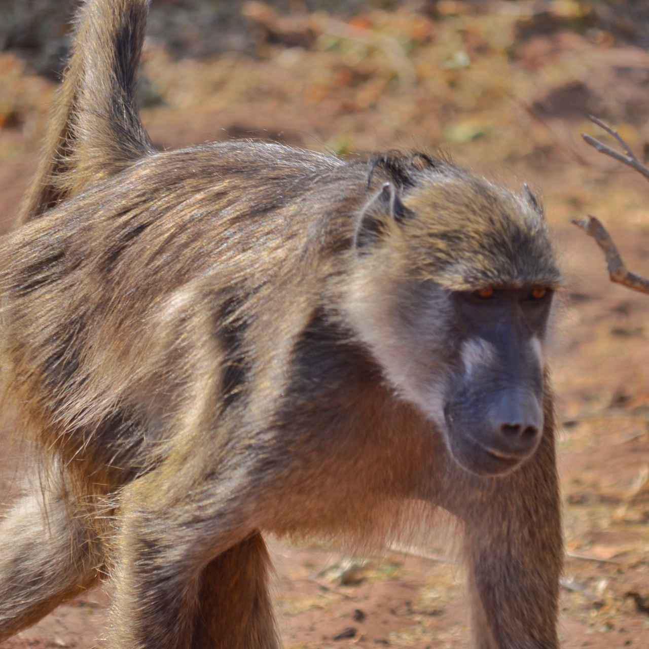画像13: 【南アフリカ】大自然を満喫!南アフリカ旅行の基本情報