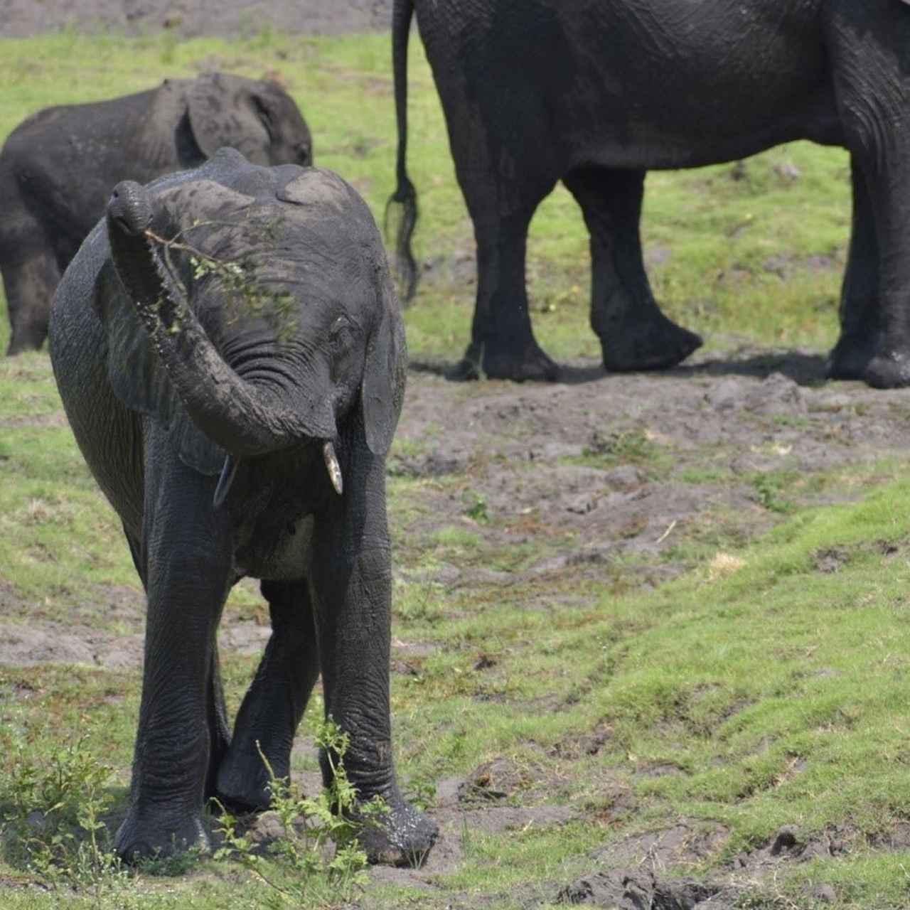 画像: 野生の象をこの距離で見ることができます!(弊社スタッフ撮影※諸条件によりご覧いただけない場合があります)