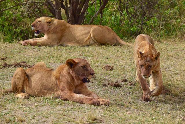 画像: 【南アフリカ】大自然を満喫!南アフリカ旅行の基本情報 - クラブログ ~スタッフブログ~|クラブツーリズム